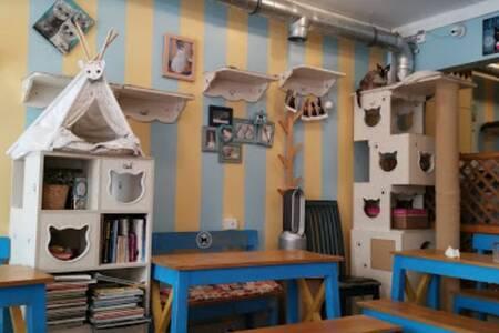 Le Chat Mallow, Bar Paris Falguière #0