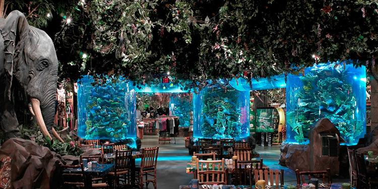 Rainforest Cafe, Restaurant Chessy  #0