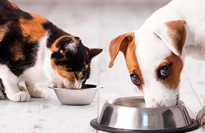 How to choose the best dog and cat food