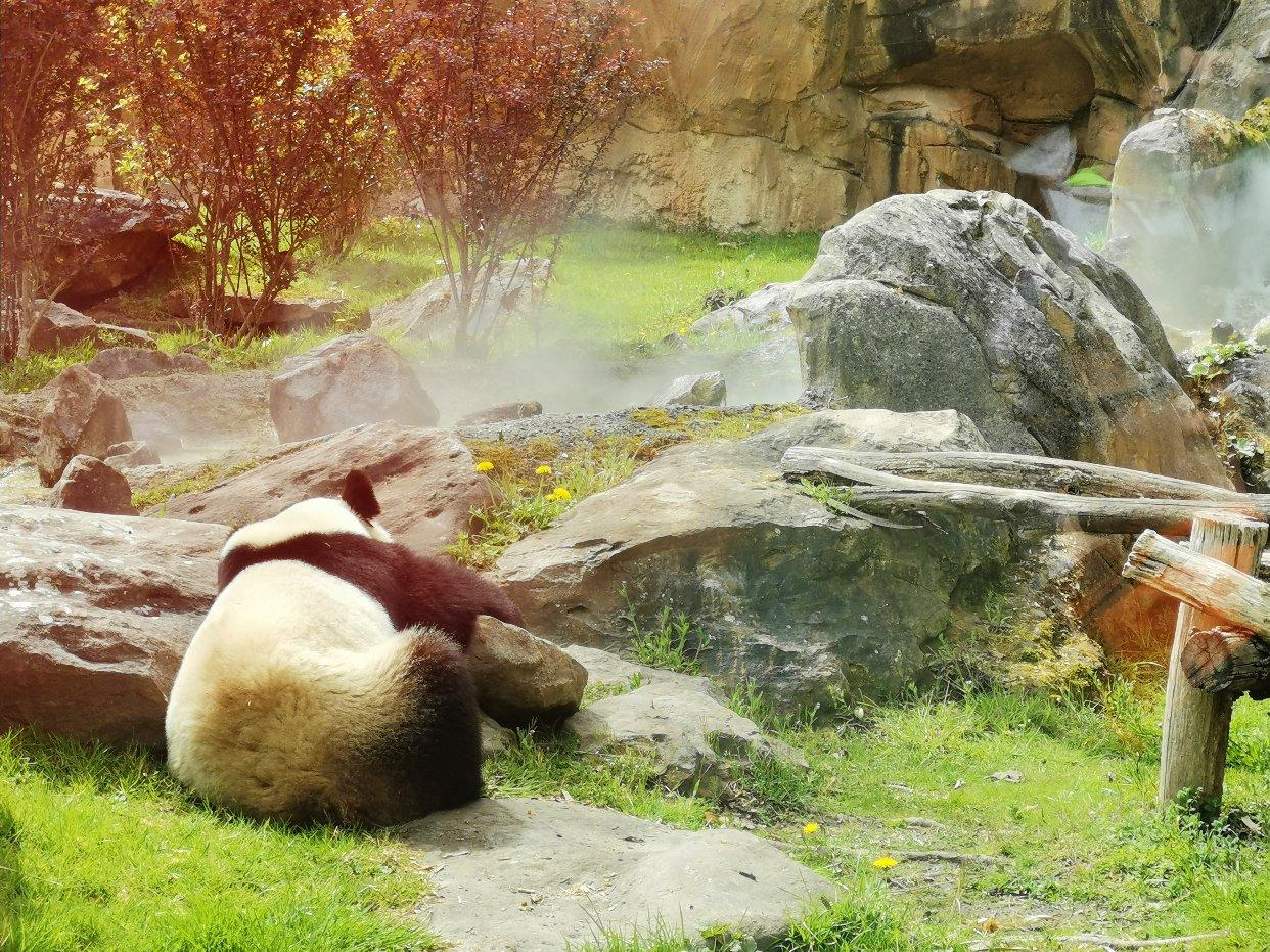 法国最大动物园Beauval