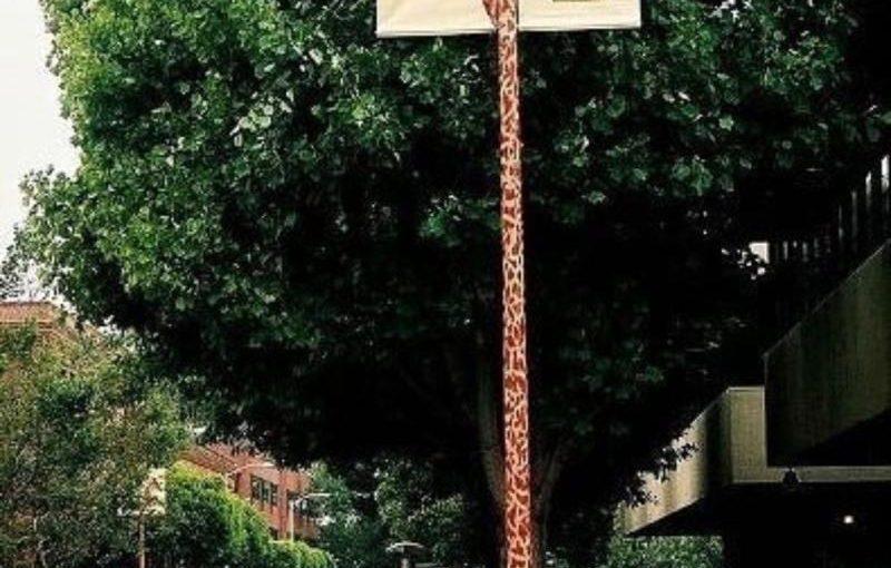 ♦️ San Francisco Zoo: Meet a Giraffe