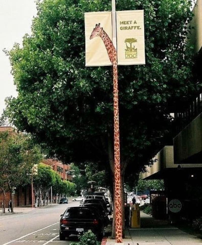 San Francisco Zoo Meet a Giraffe