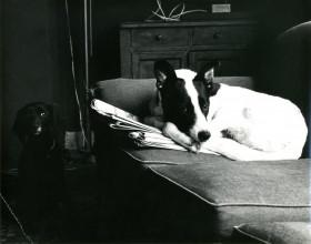 Twee honden, ca. 1980 © Helena van der Kraan/Nederlands Fotomuseum/Stedelijk Museum Amsterdam