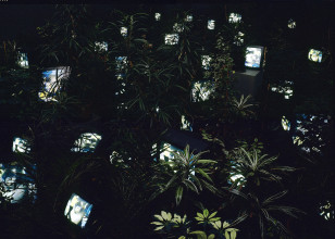 Nam June Paik, 'TV Garden', 1974-1977 (2002). Kunstsammlung Nordrhein-Westfalen, Düsseldorf © Estate of Nam June Paik