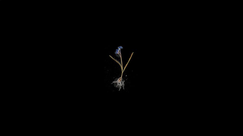 Lotte Reimann, 'objects and people', 2021. HD-video met geluid, duur: 20min45