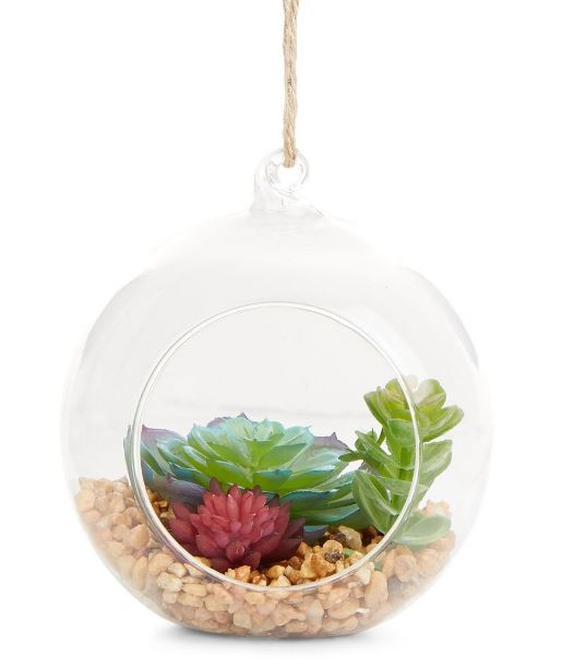 secret-santa-gifts-succulent