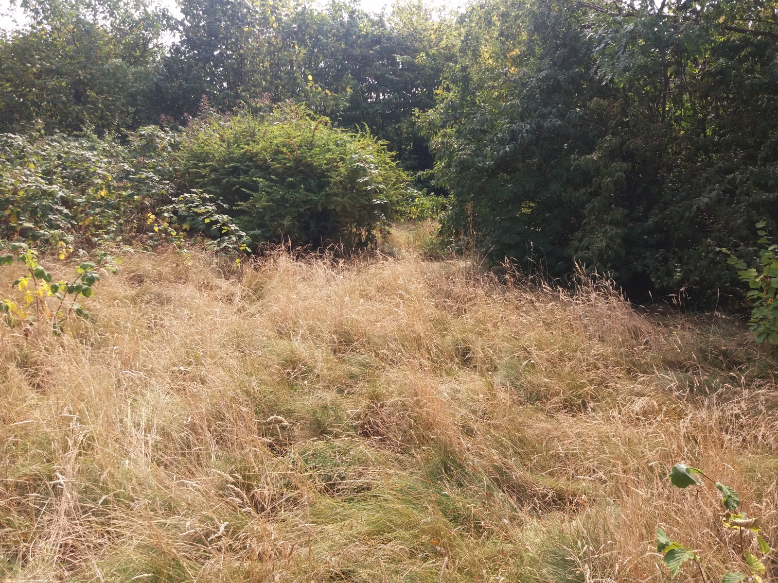 Land At Cross Lane, Bayston Hill, Shrewsbury, Shropshire