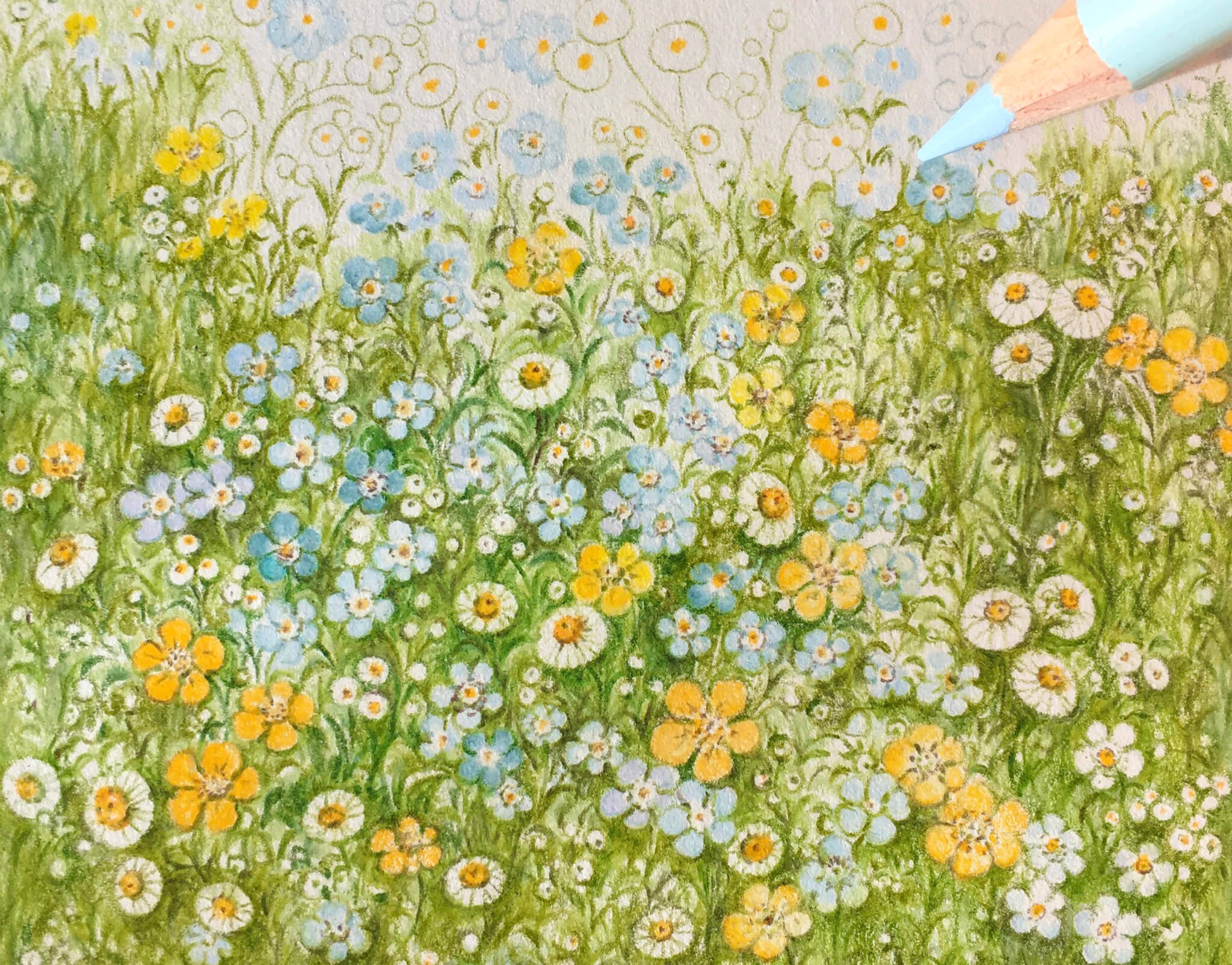 Small wild flowers and colored pencil art with Yeo Jin