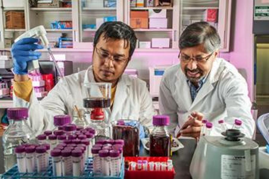 Berry By-Products May Provide Alternative to Antibiotics