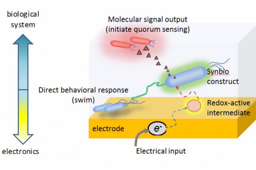 BIOE, IBBR Researchers Develop Electrogenetic Device for Activating Gene Expression Via Electrodes