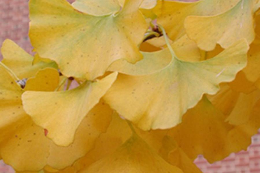 Fundraising Campaigns for the Norton-Brown Herbarium