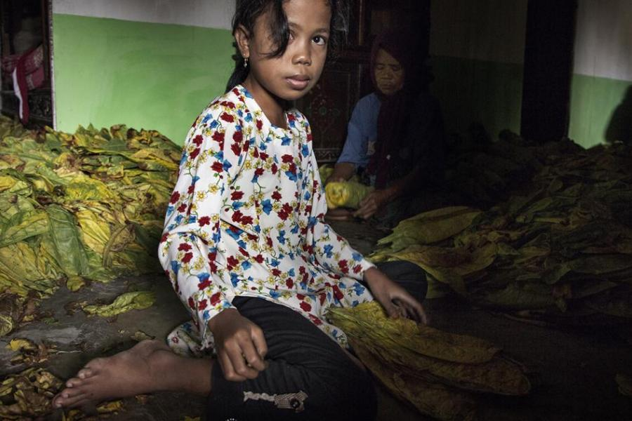Indonesia's Child Tobacco Workers in Peril