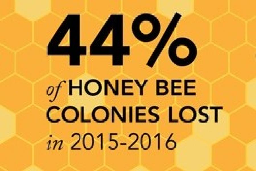 Nation`s Beekeepers Lost 44 Percent of Bees in 2015-16