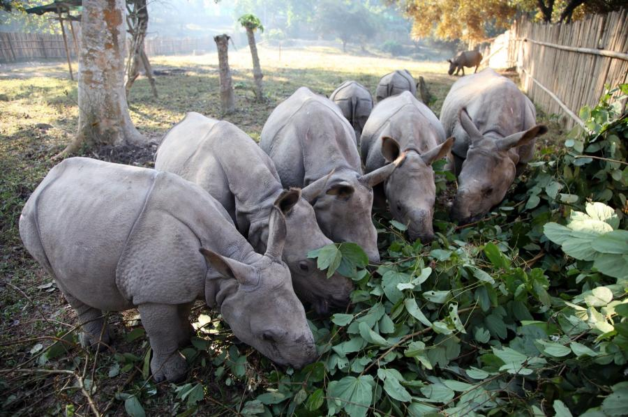Saving orphaned baby rhinos in India