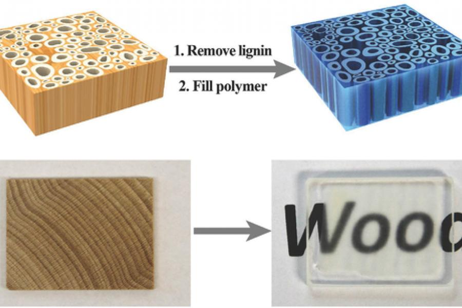 Transparent wood could create new windows, cars and solar panels