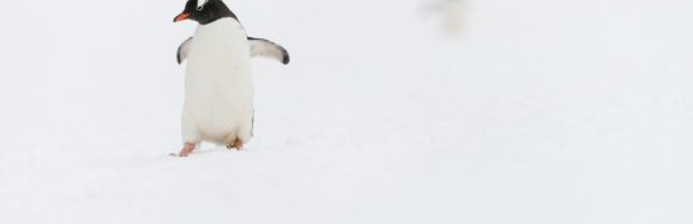 Birding in Antarctic waters