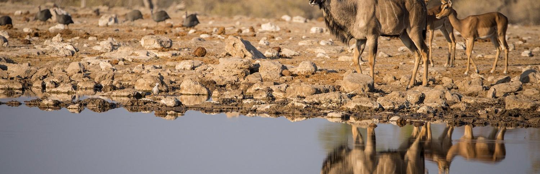 Exploring Namibia - Etosha National Park