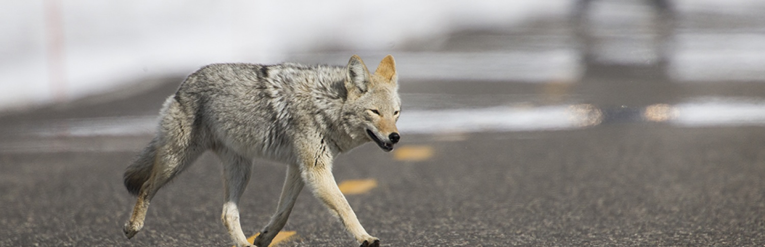Shortcuts That Shortchange Wildlife Photography - Outdoor...