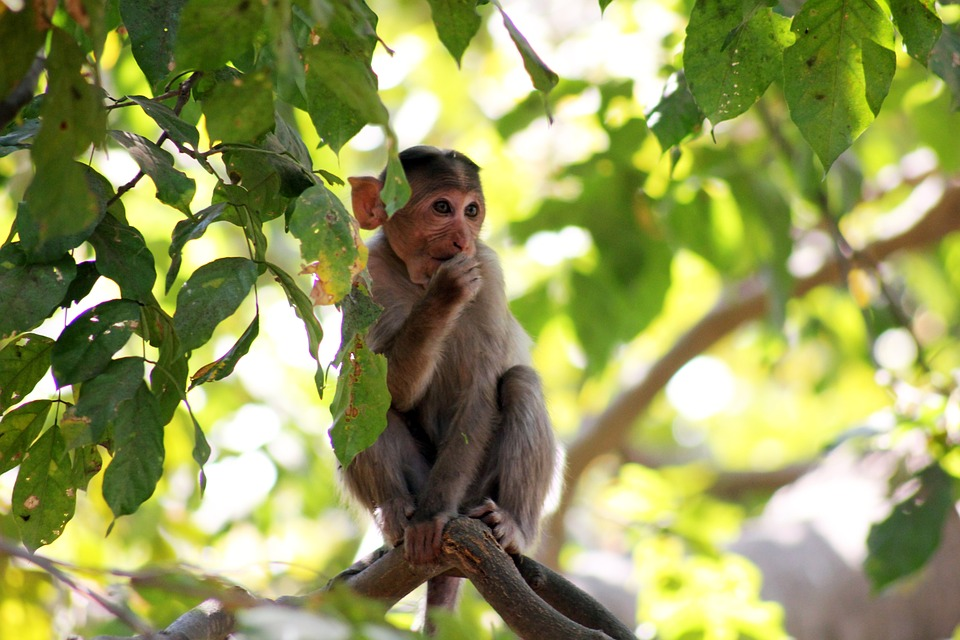 Sex email monkey in tree