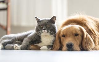 Britain prefers dogs to cats survey says