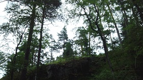 В лесу недалеко от лагеря