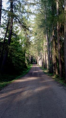 Дорога к Игуменскому кладбищу