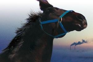 The Horses of Fukushima