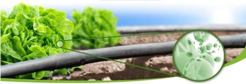 linea vegetal SQM