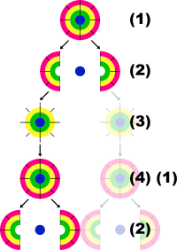 Células de la abundancia: estafa piramidal