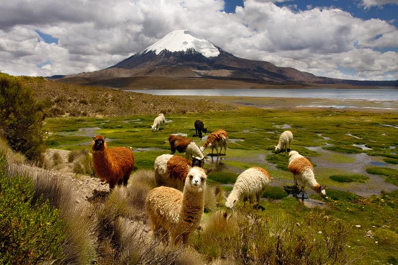 Los diez mejores lugares de Chile para visitar: parque nacional lauca