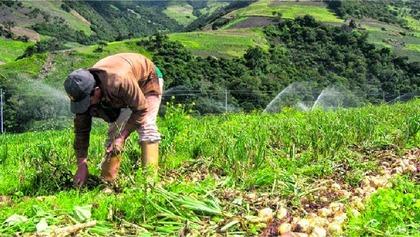Peru sectores foro