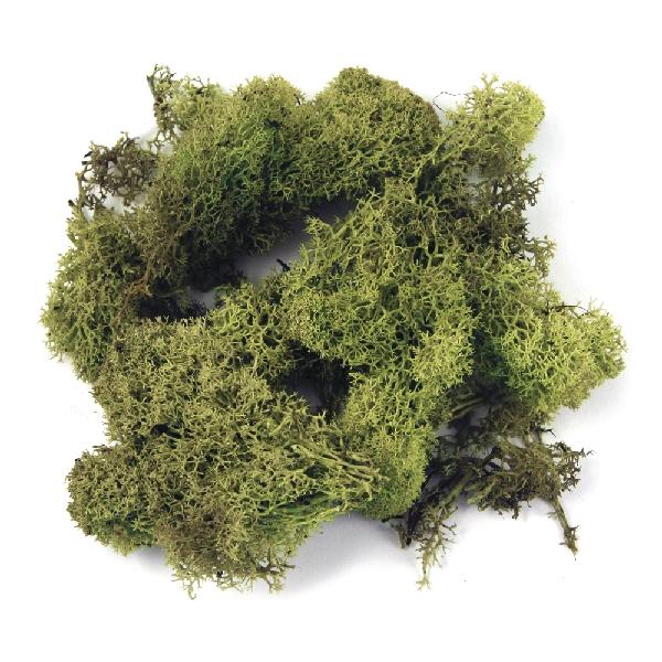 Izlandi moha, vil.zöld, csom. 30 g