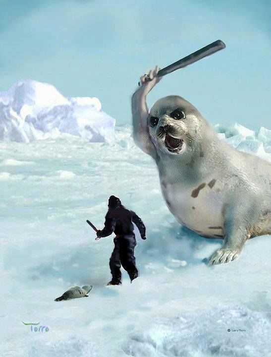 seal hunting in canadas coast angered animal rights activists