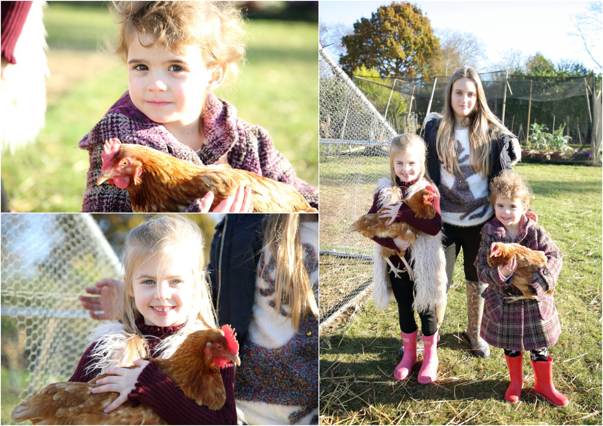 holding chickens at fun family photo session on family farm, in suffolk countryside