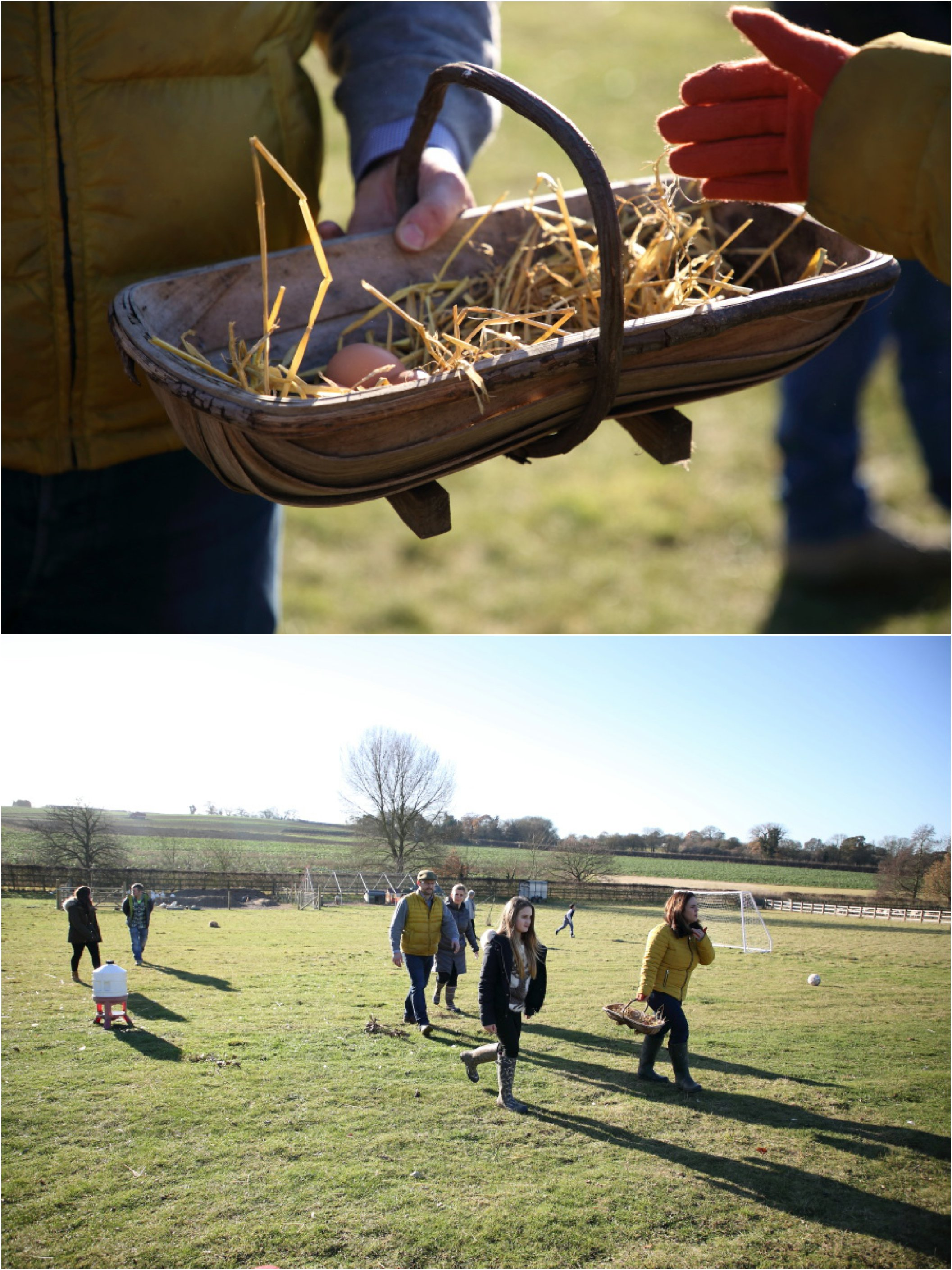 collecting the eggs at family photography session on farm in suffolk