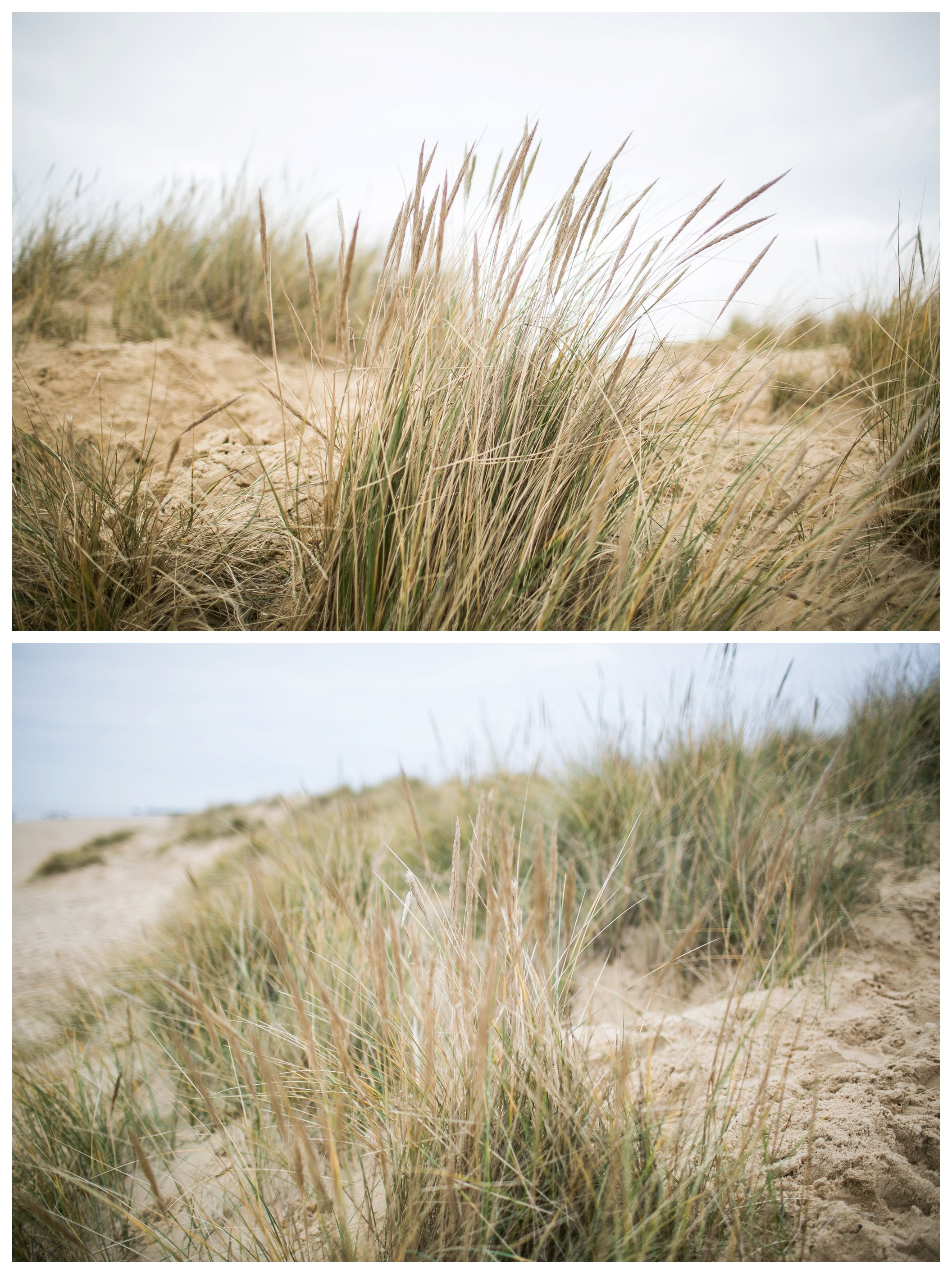 grasses at southwold beach