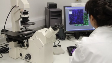 Scientist looking through microscope and check results on screen