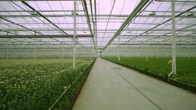 WS PAN Green crops grow in a greenhouse