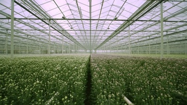 WS TU Green crops grow in a greenhouse