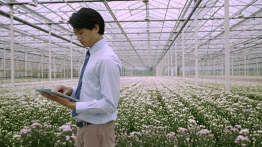 MS PAN Businessman using digital tablet in greenhouse