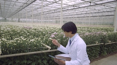 MS Scientist examining plant and using digital tablet in greenhouse