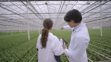 MS Scientists discussing and using digital tablet in greenhouse