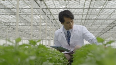 MS Scientist examining plant and using tablet in greenhouse