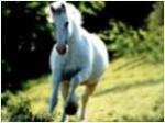 Horse Empowerment Reiki Attunement