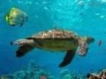 `Turtle Medicine Reiki Empowerment