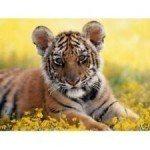 Tiger Reiki Attunement