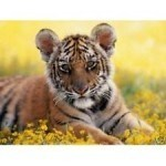 Tiger Reiki Attunement