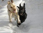 Animal Reiki Course
