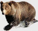 Bear Medicine Reiki