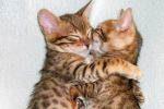 Feline Love Reiki